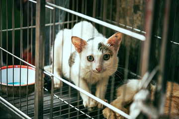 white and brown cat inside cage